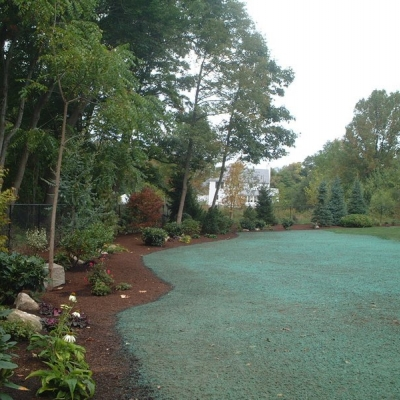 Perimeter Planting and Hydroseeded Lawn Area