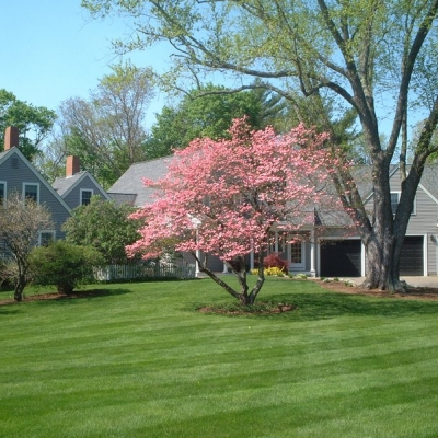 Lawn Maintenance Including Mowing and Fertilization